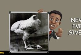 How The Story of Mike – The Headless Chicken, Inspired & Changed My Life